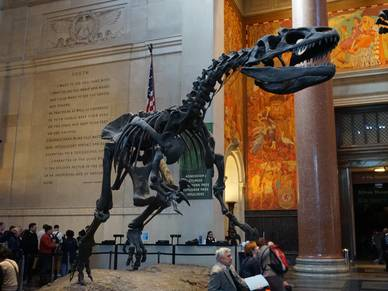 American Museum of Natural History, Sprachreise New York
